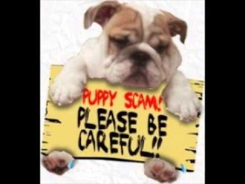 How To Avoid Being A Victim Of Puppy Scam